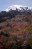 White Mountains 1982-1999