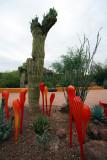 Saguaro and Glass