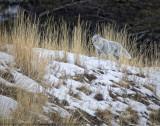 Yellowstone in Winter II
