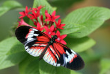 butterfly_world_2009