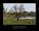 Spring time at the Marsh Rørsøen