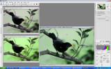 blackbird nx.jpg