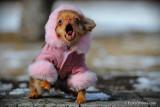 Hammy doesn't like her coat