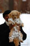 Dec 18h/07    SNOWBALLS ! !