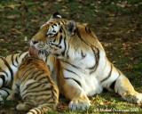 Zoo 09830.JPG
