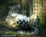 Zoo 09836.JPG