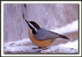 OISEAUX DU QUÉBEC / BIRDS OF QUÉBEC CANADA
