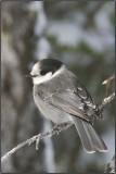 FAVORITES BIRDS / OISEAUX PRÉFÉRÉS