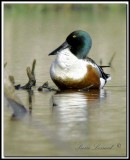 Canards - ducks