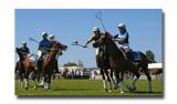 Polocross 147.jpg