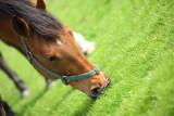20080511 - Horseplay 2
