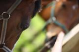 20080511 - Horseplay 4