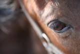20080511 - Horseplay 5