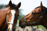 20080511 - Horseplay 7