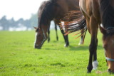 20080511 - Horseplay 9