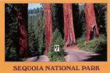 2007 - Sequoia National Park
