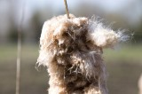 dog with hairs in the wind