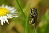 brown fly on grass