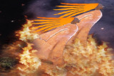 flying away from flames.jpg