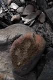 seasnakes head