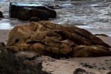 lion sleeping on beach