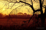Morning Tree West Road.jpg