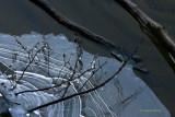 Rich Lake Ice.jpg