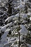 Der weiße Schnee...