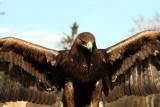 ... Der Adler sprach...