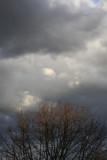 Lauschende Wolke über dem Wald...