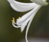 weiß / white