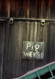 Pig Wanted!