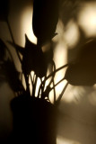 Shadow Of A Plant