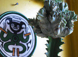 Cactus and Green Plate
