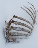 Ribcage In Snowdrift