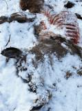 The Forgiving Snow