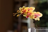 Orchid-0044