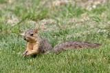 Squirrel-0021