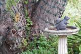 Squirrels-0113
