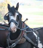 Random Horses