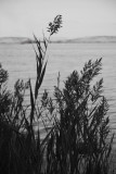 Grasses by the sea