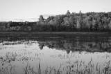 The marlboro bogs