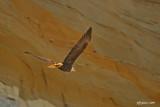eagle-against-clay-cliffs.jpg