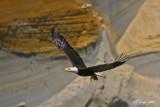 eagle-lunch.jpg