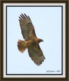 hawk-framed.jpg