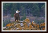 majestic-eagle2-framed.jpg