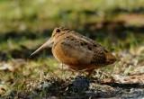A Birding Weekend 2/18 thru 2/21/2010