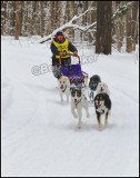 All Breeds Of Dogs Are Ran With The Alaskan Husky Being One Of The Most Popular
