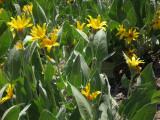 More Sun Plants