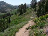 Mount Rose Trail